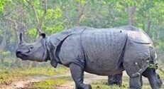 PPFA demands transparency in Assam rhino horn disposal